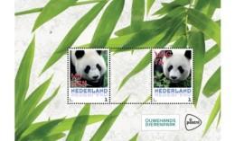 Prachtig Velletje Van  De Reuzenpanda's Wu Wen En Xing Ya  Nederland Netherlands MNH En Drie Kaarten - Bears