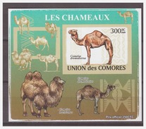 0195 Comores 2009 Kameel Camel S/S MNH Imperf - Timbres