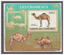 0200 Comores 2009 Kameel Camel S/S MNH Imperf - Timbres