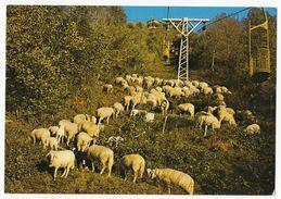 Laveno - Percorso Della Funivia Del Lago Maggiore E Le Pecore - Non Usato - Andere Städte