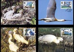 Romania 2006 4 Maxi Cards Protected Birds - The Eurasian Spoonbill