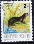 PIA - UNGHERIA :  1986 : Animali Selvatici Protetti : Lontra - (Yv 3070)