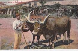 Carte Postale :Bois Do Norte De Portugal  (Portugal)  - Belle Scène   Ed Costa N° 1136 - Portugal