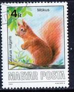PIA - UNGHERIA :  1986 : Animali Selvatici Protetti : Scoiattolo - (Yv 3074)