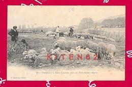 Troupeaux De Moutons à St-Laurent, Près De Port-Ste-Marie, Bergers, Chiens, Femme Avec Une Ombrelle. - Sonstige Gemeinden