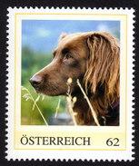 ÖSTERREICH 2012 ** Hund,dog / Irish Setter - PM Personalized Stamp MNH