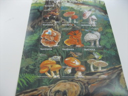 Tanzania-Mushrooms-Butterflies - Champignons