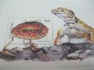 Lesotho-Mushrooms - Champignons