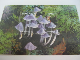 Tanzania-Mushrooms-Butterflies - Funghi