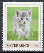 ÖSTERREICH 2016 ** Junge Katze, Cat - PM Personalized Stamp MNH - Austria