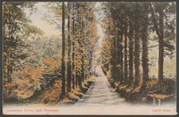 Carnanton Drive Near Newquay, Mawgan In Pydar, Cornwall, 1907 - Argall Postcard - Newquay