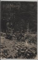 Hägendorf I. Soloth. Jura - Tuffbrunnen In Der Teufelsschlucht - Stempel: Murgenthal - SO Soleure
