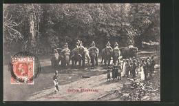 CPA Ceylon Elephants, Indische Arbeitselefanten - Éléphants