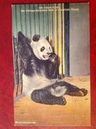 Giant Panda - Chicago Brookfield Zoological Park Illinois - Autres