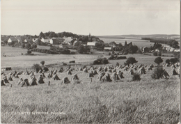 Louette St. Pierre - Joli Panorama Bucolique ... Du Village ... Meules De Foin - Gedinne