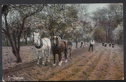 Animals Postcard - Agricultural - Farming - Horses Ploughing A Field DC104 - Paarden
