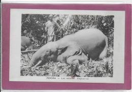 PEREIRA - LAC AZINGO .- Eléphant Tué - Colombia