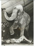 ELEPHANTS - OSSY HOPPE / JAYNE MANSFIELD / PENNY SMART - 3 PHOTOS PRESSE 1958 / 1959 - Photos
