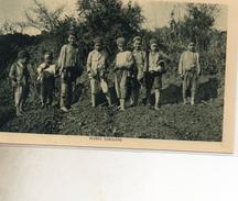 CAVALIER DE FANTASIA 442