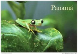 Lote PEP908, Panama, Postal, Postcard, Rana Arboricora, Frog - Panamá