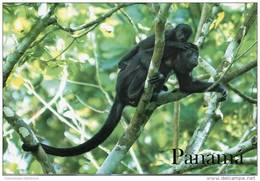 Lote PEP910, Panama, Postal, Postcard, Mono Aullador, Monkey - Panamá
