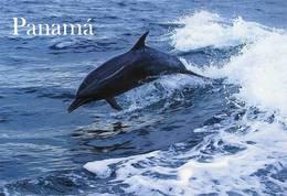 Lote PEP918a, Panama, Postal, Postcard, Delfin, Dolphin, Fauna - Panamá