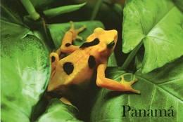 Lote PEP918b, Panama, Postal, Postcard, Rana Dorada, Golden Frog, Fauna - Panamá