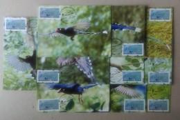 10 Maxi Cards Black Imprint ATM Frama -PHILATAIPEI 2016 World Stamp Exhi.-Taiwan Blue Magpie Bird Unusual - ATM - Frama (vignette)