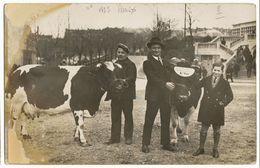 PARIS 1935 CARTE PHOTO CONCOURS AGRICOLE PARIS 1935 1ER PRIX VACHES LAITIERES (TRACES HUMIDITE A GAUCHE )