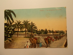 Carte Postale -  TRIPOLI - Via Carovaniera Dei Cammelli 1913 (1342) - Libyen