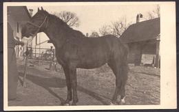 FAUNA , HORSES ,  OLD  POSTCARD - Pferde