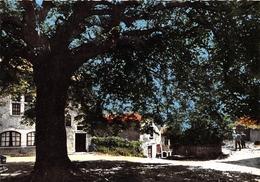 01-CITE DE PEROUGE- L'ARBRE DE LA LIBERTE , TILLEL PLANTE EN 1792 - France
