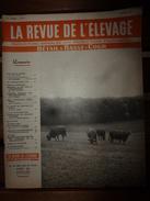 1956 LRDLE Elevage Au MAROC; En Allemagne; Les Lapins; Dindonneaux ; Aviculture; La Gastronomie; Etc - Animals
