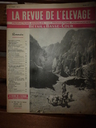 1956 LRDLE Elevage Au MAROC; En Hollande;Recalcifier La Terre;Pâturage ; Les Conseils; Etc - Animals