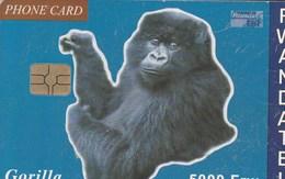 Rwanda - Gorilla - Rwanda