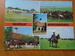 D150317  Hungary Hortobagy  - Horse Pferd Cheval - Pferde