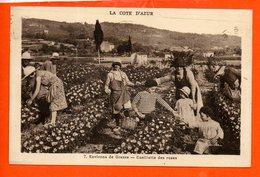 06 Environs De GRASSE : Cueillette Des Roses - Culture - Cultures