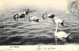 [DC10275] CPA - ANIMALI - I CIGNI - LES CIGNES - Viaggiata - Old Postcard - Animali