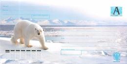 RUSSIA 2007.06.27-03 Polar Bear - 1992-.... Federation