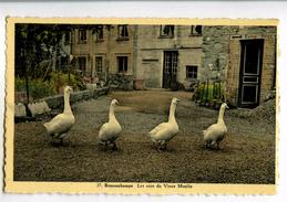 A 19917  -  Remouchamps   -   Les Oies Du Vieux Moulin - Aywaille