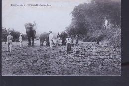 CEYLAN ELEPHANTS - Non Classés