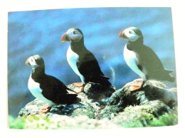 Post Card From Island Iceland To Germany 1996 Landscape Mountains Birds Oiseaux Puffins - 1944-... Republique