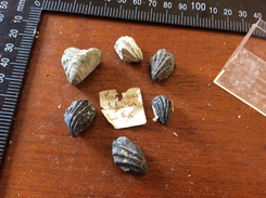 Fossiles à Identifié Le Lot - Fossils