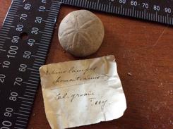 Fossiles à Identifié - Fossils