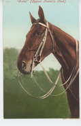 "CHEVAUX - HORSE - ""GRETEL "" - Typical Hunter's Head - Chevaux"