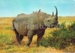 Black Rhinoceros - Rhinoceronte Nero - Africa - Animals - 396 - Italy - Unused - Rhinocéros