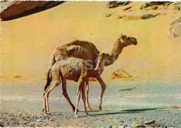 Dromedary - Camelus Dromedarius - Africa - Animals - 396 - Italy - Unused - Rhinocéros