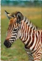 Grant's Zebra - Equus Quagga Boehmi - Africa - Animals - 396 - Italy - Unused - Rhinocéros