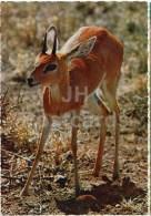 Gazelle - Gazella - Africa - Animals - 396 - Italy - Unused - Rhinocéros