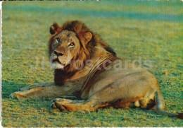 Lion - Africa - Animals - 396 - Italy - Unused - Rhinocéros